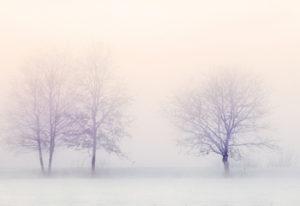 Arbre l'hiver